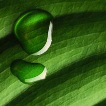 analisi visiva piante